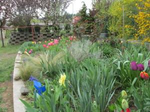 Március vége, az emelt virágos kertemben